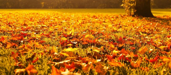 Getting to know: Autumn Idioms